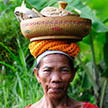 indonésie: Local women are often seen with big loads on their heads. Even while working they often wear fancy clothes.