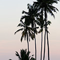indonésie: Palm trees at sunset. Couldnt help myself.