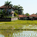indonésie: Common houses with rice fields, few hundred metres from sea.