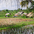indonésie: A common view of rice paddies just out of town.